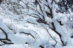 Nieve en ramas de árboles en bosque del invierno Foto de archivo