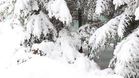 Nieve en ramas del abeto almacen de metraje de vídeo