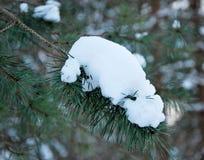 Nieve en ramificaciones de árbol Imágenes de archivo libres de regalías