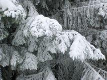 Nieve en ramificaciones del abedul Foto de archivo libre de regalías
