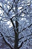 Nieve en un árbol Foto de archivo libre de regalías