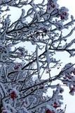 Nieve en un árbol Fotografía de archivo libre de regalías