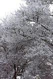 Nieve en un árbol Imagen de archivo libre de regalías