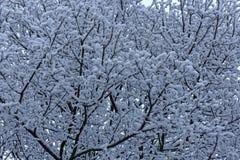 Nieve en un árbol Fotografía de archivo