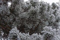 Nieve en un árbol Fotos de archivo