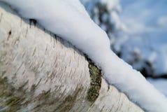 Nieve en un abedul Imagenes de archivo