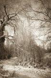 Nieve en un bosque Fotos de archivo libres de regalías