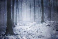 Nieve en un bosque oscuro congelado con los copos de nieve