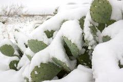 Nieve en un cactus imagen de archivo libre de regalías