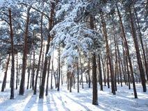 Nieve en una ramificación foto de archivo libre de regalías