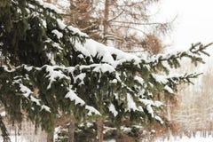 Nieve en una ramificación Fotografía de archivo libre de regalías