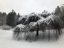 Nieve en Washington Park Arboretum 1 fotografía de archivo libre de regalías