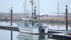 Nieve, Fishboat y garzas de Steveston metrajes