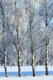 Nieve fría Rusia del paisaje del bosque del invierno Foto de archivo libre de regalías
