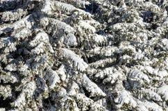 Nieve fresca Fotografía de archivo