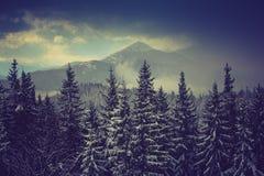 Nieve fresca del bosque de la montaña del pino del invierno en los árboles Imagen de archivo
