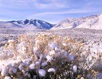 Nieve fresca, desierto, montañas, árboles, cielo Fotos de archivo libres de regalías
