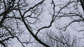 Nieve fresca en árboles en el movimiento de Forest Camera metrajes