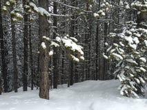 Nieve fresca a través del bosque Foto de archivo