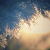 Nieve grande en la puesta del sol Nieve macra Copos de nieve de gran tamaño La nieve brilla en el sol Fondo hermoso Foto de archivo libre de regalías