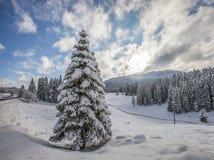 Nieve II del bosque Imagenes de archivo