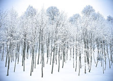 Nieve Kartepe, Kocaeli, Turquía de Forest Hills del invierno Fotos de archivo libres de regalías