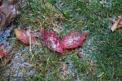 Nieve ligera en la tierra Fotografía de archivo libre de regalías