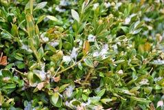 Nieve ligera en la tierra Imagen de archivo libre de regalías