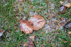Nieve ligera en la tierra Foto de archivo