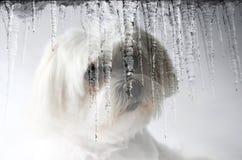 Nieve-perro Imagen de archivo libre de regalías