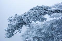 Nieve-pino de la montaña de huangshan Foto de archivo