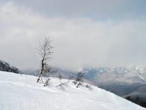 Nieve profunda Fotos de archivo libres de regalías