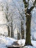 Nieve que cae Fotografía de archivo