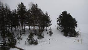 Nieve que cae almacen de metraje de vídeo