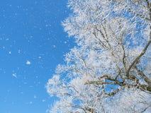 Nieve que cae abajo un árbol del invierno Imágenes de archivo libres de regalías
