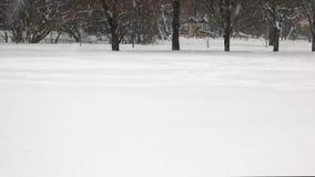 Nieve que cae que cubre los árboles almacen de video