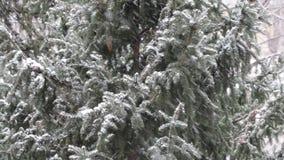 Nieve que cae delante de árboles metrajes