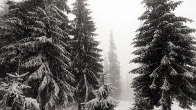 Nieve que cae en bosque libre illustration