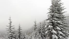 Nieve que cae en bosque stock de ilustración