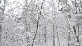 Nieve que cae en bosque con los troncos de árbol que se sacuden suavemente en viento metrajes