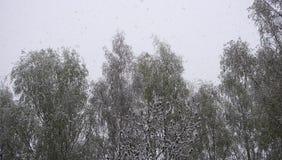 Nieve que cae en bosque hermoso en el día de invierno Foto de archivo