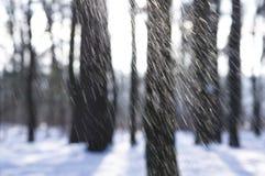 Nieve que cae en las maderas Imágenes de archivo libres de regalías