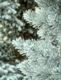 Nieve que cae en los árboles de pino del invierno Imagenes de archivo