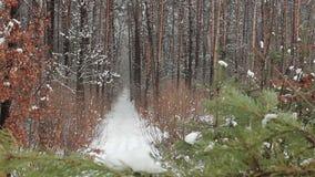 Nieve que cae en parque del invierno almacen de metraje de vídeo