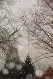 Nieve que cae en pinos Imágenes de archivo libres de regalías