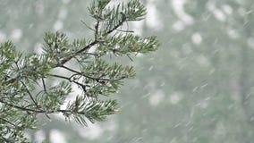 Nieve que cae en rama del pino metrajes
