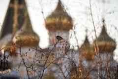 Nieve que derrite, el despertar de la primavera Gorrión que se sienta en árbol imagen de archivo