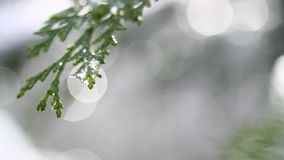 Nieve que derrite en los brotes en ramas de los árboles del invierno El primer del agua cae de nieve de fusión sobre fondo borros almacen de video