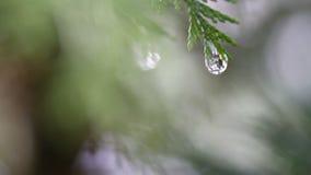 Nieve que derrite en los brotes en ramas de los árboles del invierno El primer del agua cae de nieve de fusión sobre fondo borros metrajes