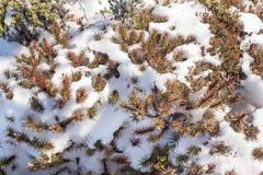 Nieve que derrite Tasmania Foto de archivo libre de regalías